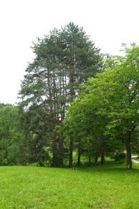 We left a bit of Mum in this copse of trees