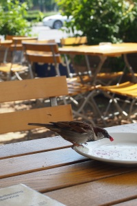 Friendly little sparrows had breakfast with me, what a delight.