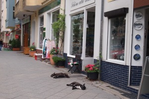 The dogs were feeling the heat , Charlottenburg antiques street.