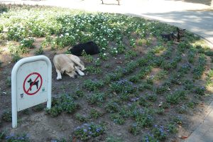 Ha ha, dogs can't read, or pretend not to.