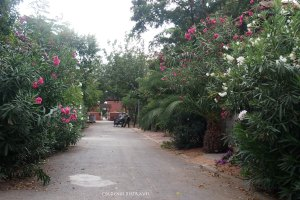 Beautiful flower lined streets on the Big Island